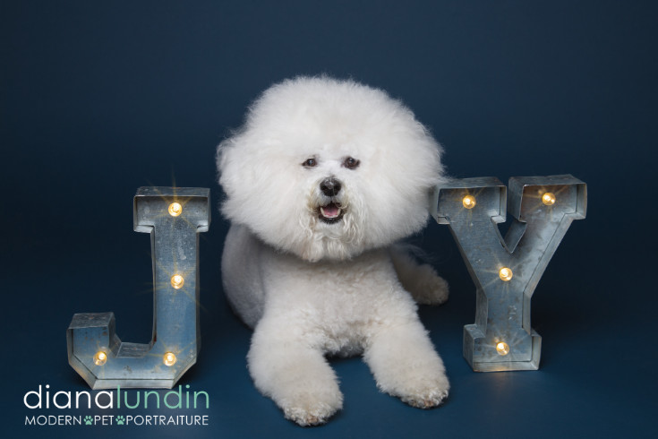 holiday pet photographer