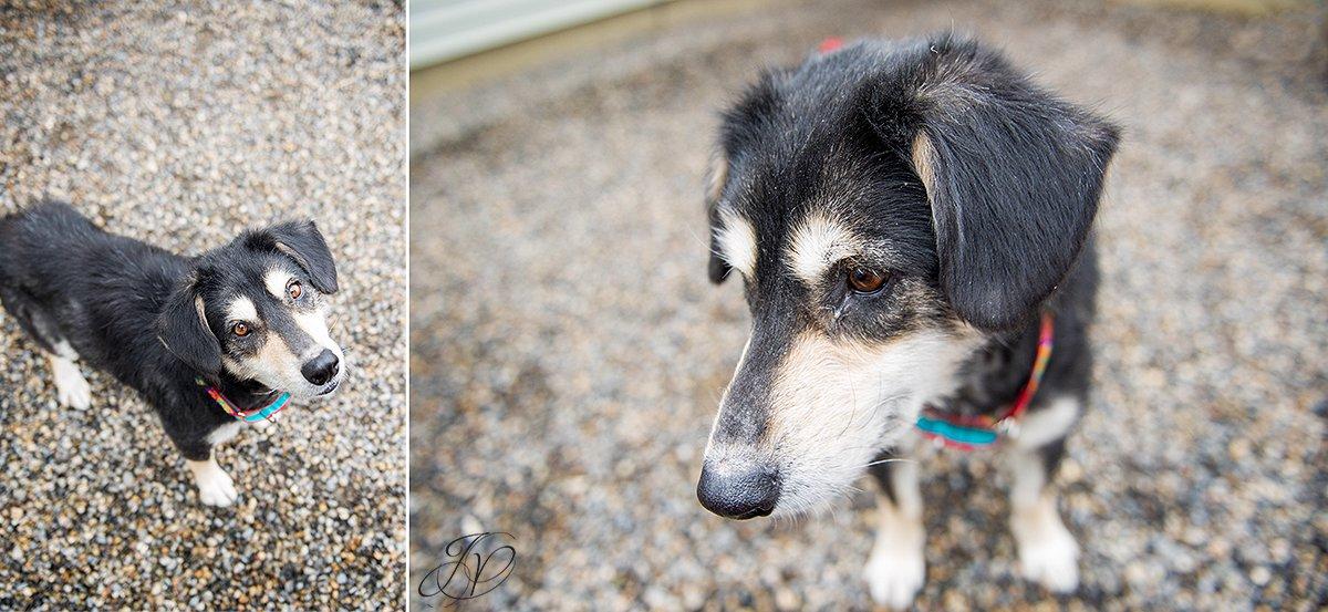dog rescue photo, rescued dog photo, canine skin disease photo, regional animal shelter