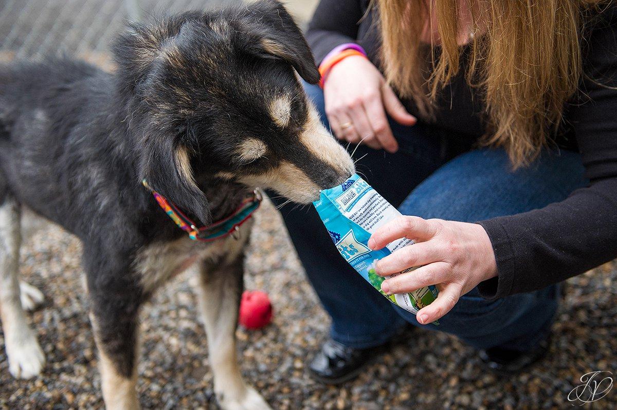 dog treats, training a dog, regional animal shelter, dog rescue photo, rescued dog photo, canine skin disease photo