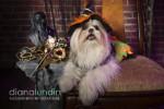 A DTLA Pet Photography Shoot