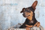 Diana Lundin Pet Photography Business Card